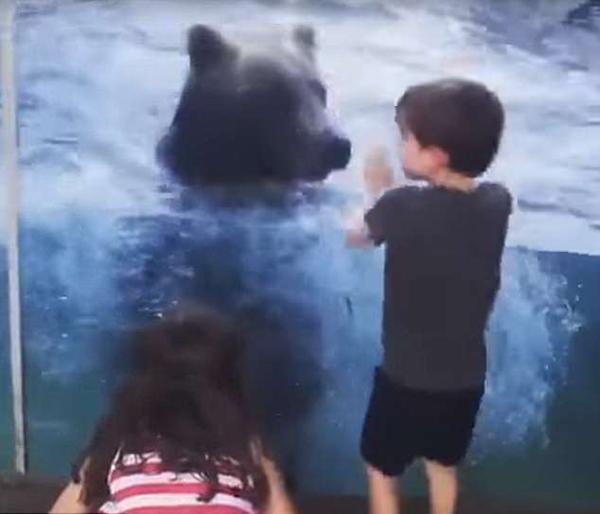 """美国顽皮灰熊上演""""模仿秀"""" 与小孩一同兴奋跳跃"""