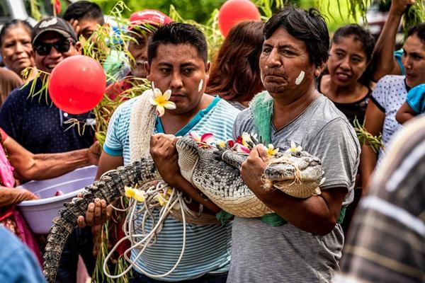 """墨西哥一市长与鳄鱼""""结婚""""  舍己为人求丰收"""