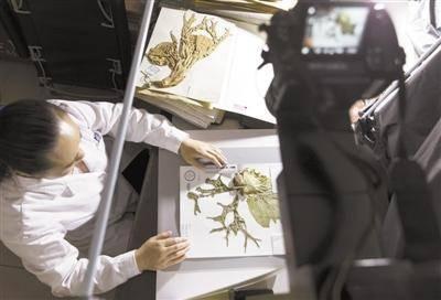 中国数字植物标本馆 标本数量已超600万