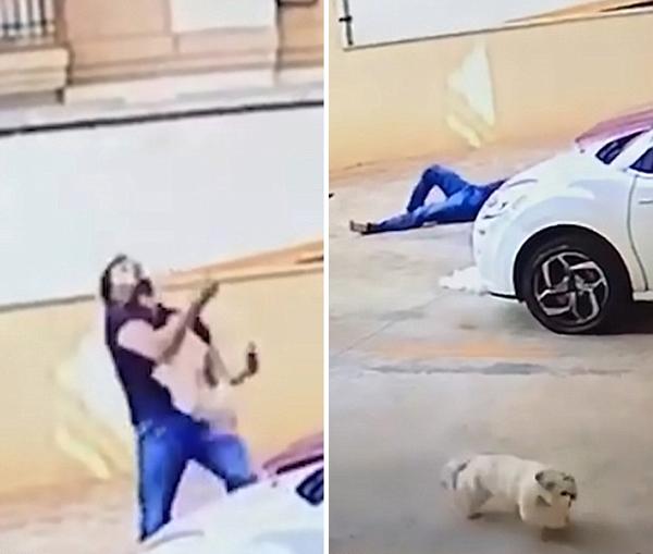 英勇!巴西男子徒手接住从9楼坠落小狗