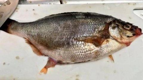 男子杀鱼时发现肚子里有动静,切开鱼肚子后他感到不可思议