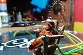 菲律宾男子自制电椅处死蟑螂被批虐待动物