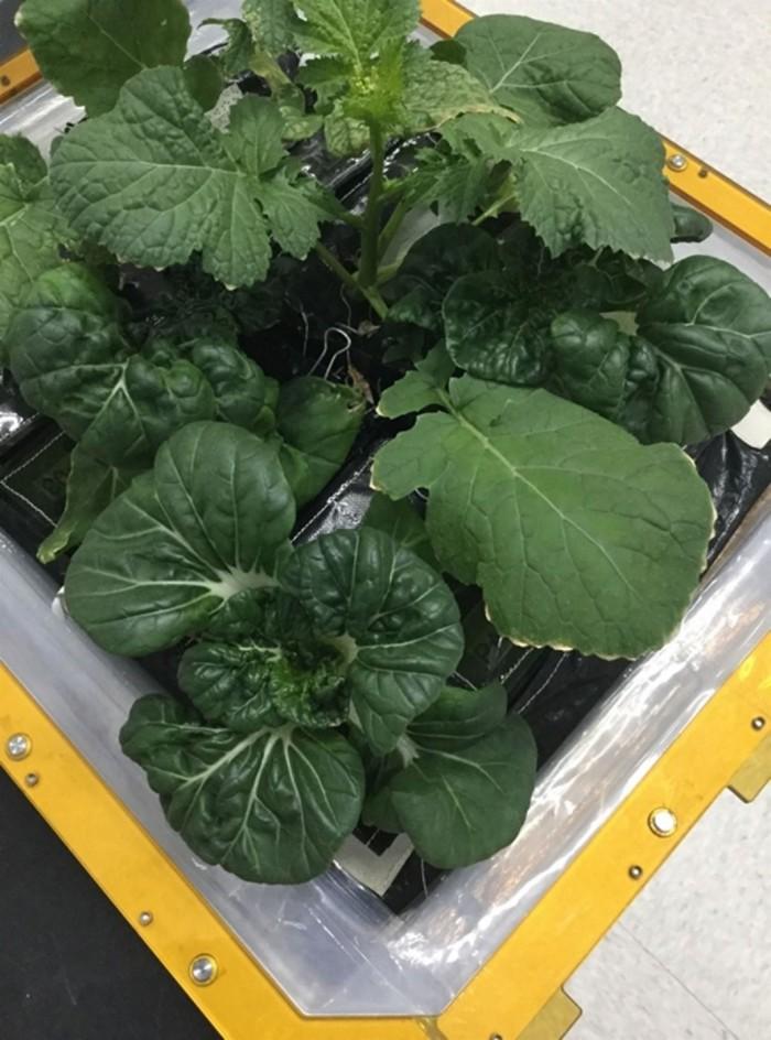 NASA为国际空间站送去生长箱 航天员将吃上新鲜蔬菜