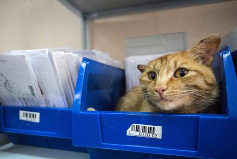 招财猫!俄邮局猫咪因吸引顾客有功获评年度员工