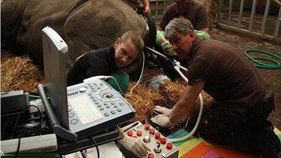 Hildebrandt(右)在工作中。(来源:nature.com)