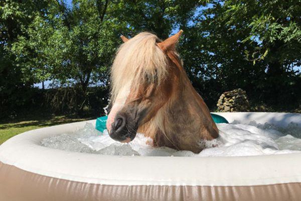 英国有个马儿SPA馆 坐享泡泡浴还能躺着敷面膜