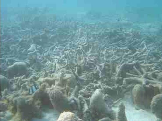 工业及生活污染致藻类爆发 波罗的海海水含氧量减少