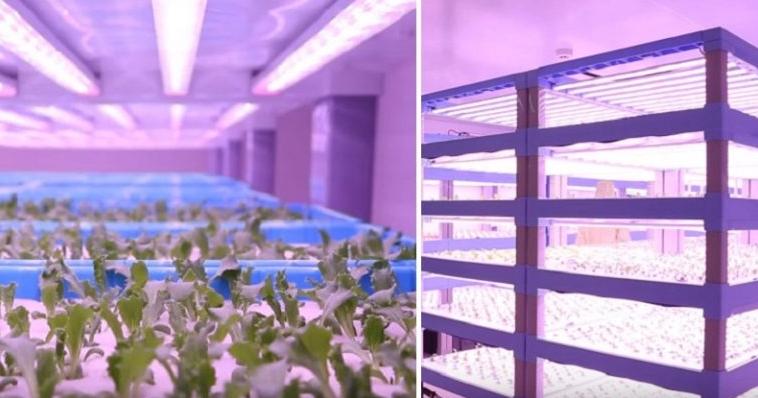 """中国公司推出了改良版的室内高科技""""智慧农场"""""""