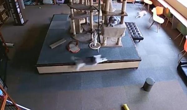 自然预警:日本猫咪在地震发生前来回乱窜