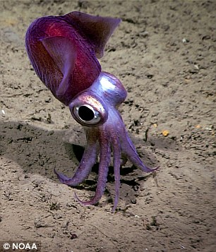 NOAA第十七次海底观测任务结束 发现诸多新物种