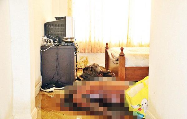 加男子公寓内死亡多日 饥饿宠物狗以尸体为食