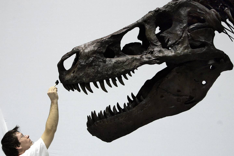 拍卖之罪!2959万买霸王龙骨架 揭秘化石交易内幕