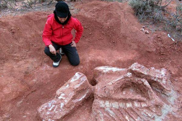 阿根廷出土巨型恐龙遗骸 距今约2亿年