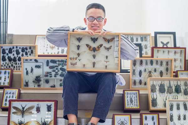 中学生制作800枚昆虫标本 学校欲建博物馆
