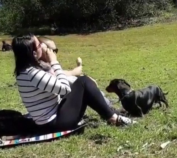 狗一口我一口!澳女子与爱犬吃同只甜筒引热议