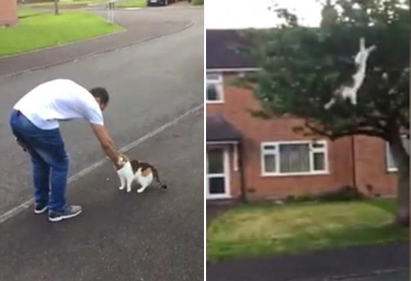 愤怒!英国一小伙以虐猫为乐终遭法律严惩