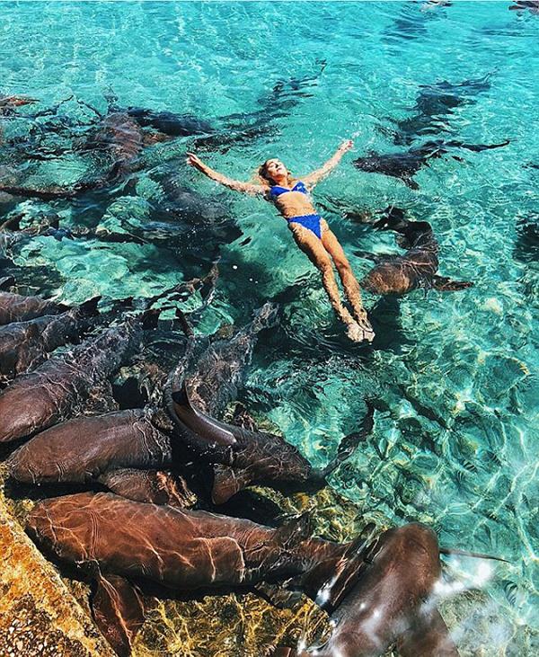 美网红模特海上漂浮拍照时被鲨鱼咬伤手腕