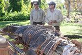 护河员追踪10年捕获巨鳄 体长4.7米