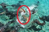 美网红海上拍漂浮照时被鲨鱼咬伤手臂