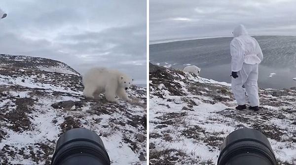 萌!好奇北极熊三番五次接近镜头被摄影师赶跑