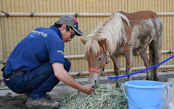 日本洪水中失踪小马驹被找到 屋顶上幸运存活