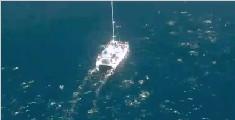 壮观奇景!一大群海豚围着航拍船跃出水面