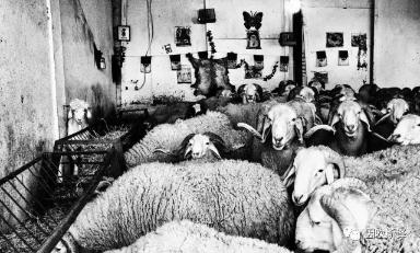 """非法斗羊的残酷世界:阿尔及利亚""""迷失一代""""的愤怒何处安放"""