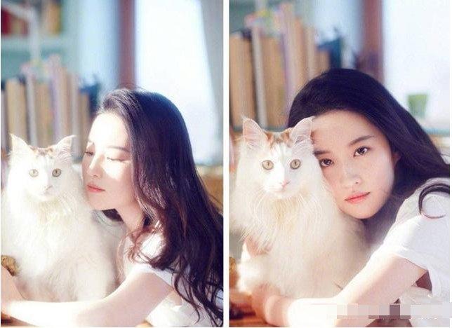 刘亦菲的猫很仙,鹿晗的猫可爱,权志龙的猫很酷而她的猫颜值逆天