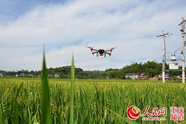 梁平:无人机统防统治助农增收