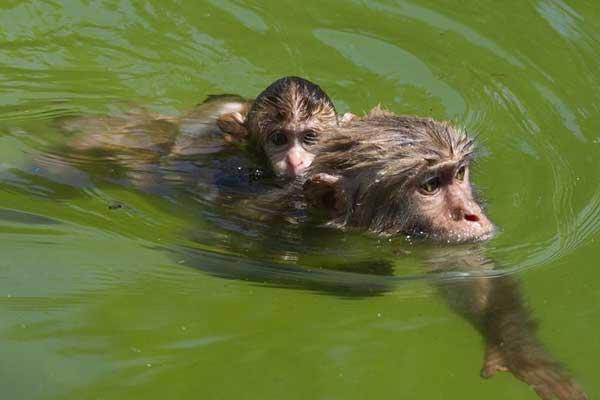 动物避暑有妙招