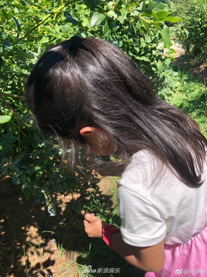 马伊琍晒4岁小女儿背影 小手肉嘟嘟采蓝莓