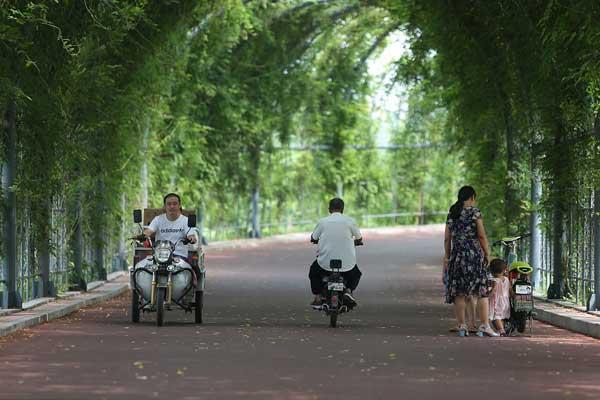 山东滨州:梦幻绿荫长廊成纳凉圣地 市民扎堆来乘凉