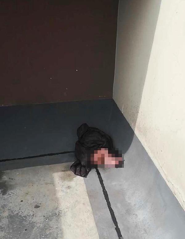 成都一小区天台现弃婴,警方:女婴身体良好,已安置在福利院