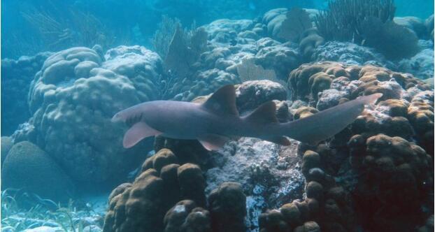 阿拉伯海鱼群死亡区扩大 可能是气候变迁所致