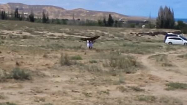 八岁女童观看金雕狩猎表演因随意走动被啄伤