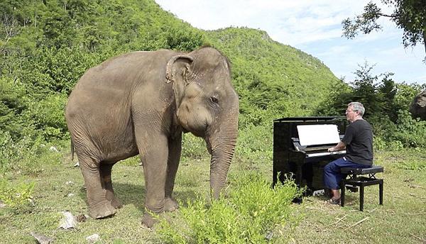 英国钢琴家为大象奏乐 失明大象随乐起舞