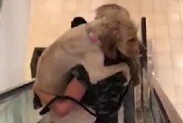 美国一大型拉布拉多犬惧怕扶梯让主人抱着下楼