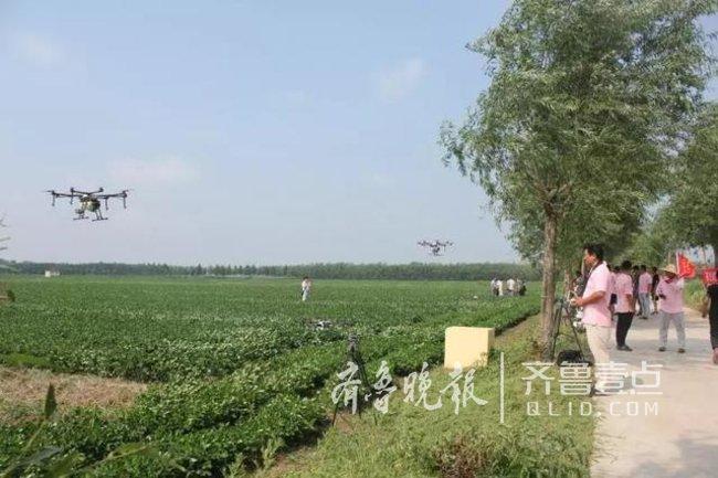 青岛首次用无人机给10万亩花生喷药 效率是人工90倍