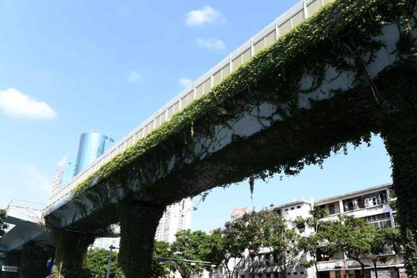 """厦门一高架桥披""""绿衣"""""""