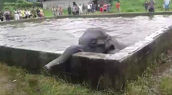 印一小象饮水时不慎跌入水池被挖掘机营救出