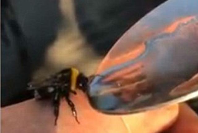 纹身男子拍摄喂食蜜蜂毒品取乐视频引公愤
