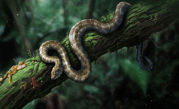 """科学家首次在琥珀中发现蛇类,命名""""缅甸晓蛇"""""""