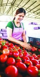 特色农业助增收