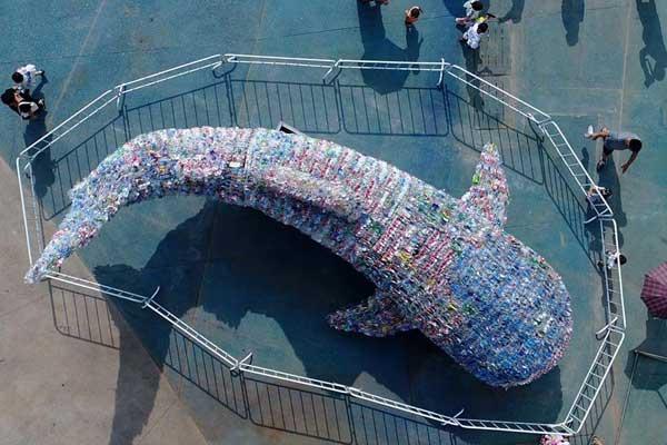 """山东日照:废旧塑料瓶变""""鲸鲨"""""""