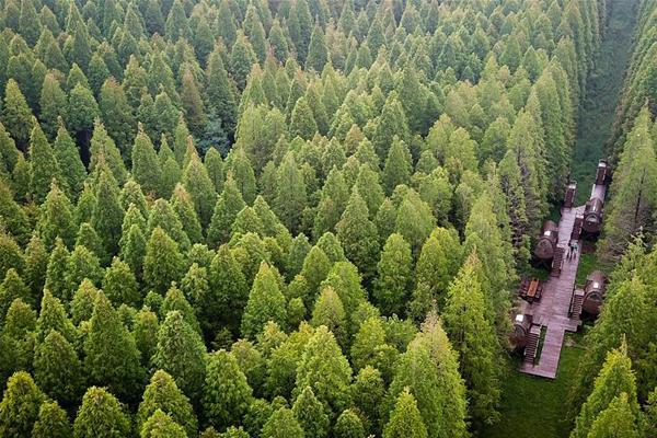 江苏东台:森林氧吧醉游人