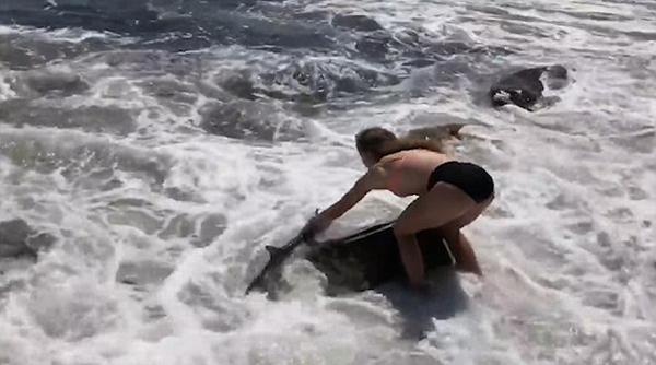 美国15岁少女勇救海滩搁浅小鲨鱼获网友点赞