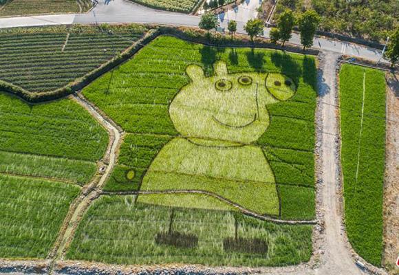 巧手农民创意多 稻田种出小猪佩奇
