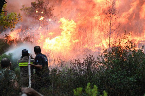 希腊雅典附近发生森林火灾 千余人紧急撤离