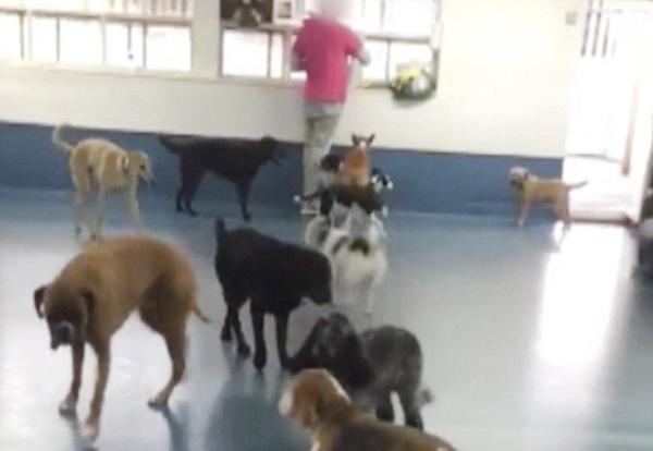 英宠物日托中心视频曝出员工打骂狗狗令人心寒