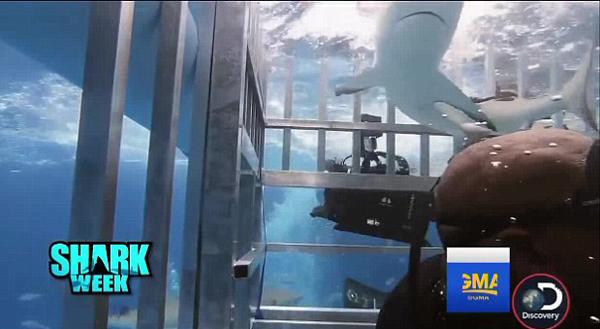 篮球名宿奥尼尔笼中与鲨鱼同潜水上演鲨口脱险